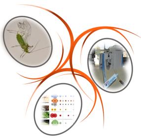 Puceron et virus de plantes